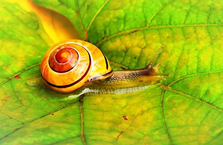 Snail Farm bewertungen